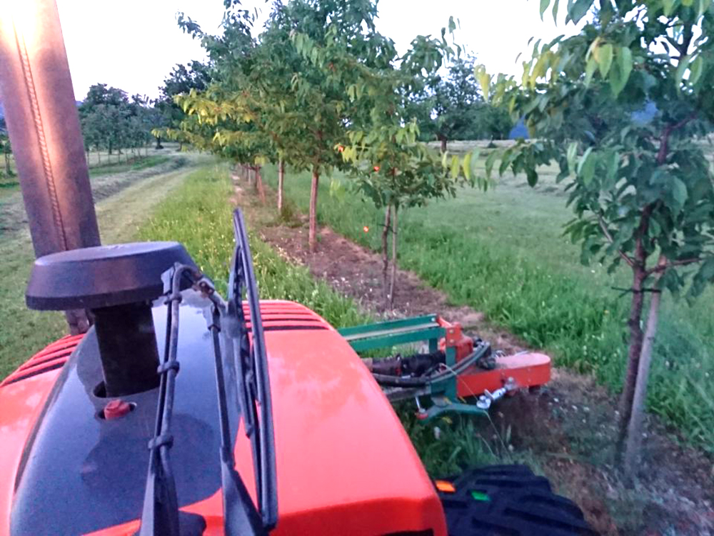 Baumstreifenbearbeitung