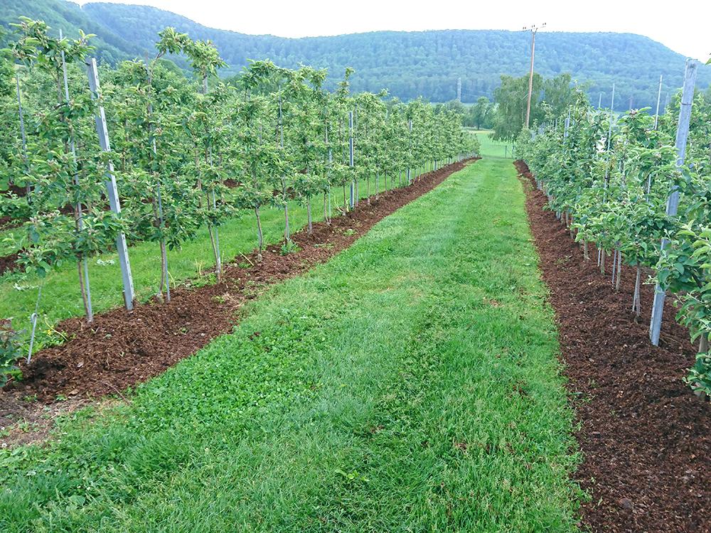 Baumstreifenbearbeitung Abdeckung mit organischem Material (Mist)