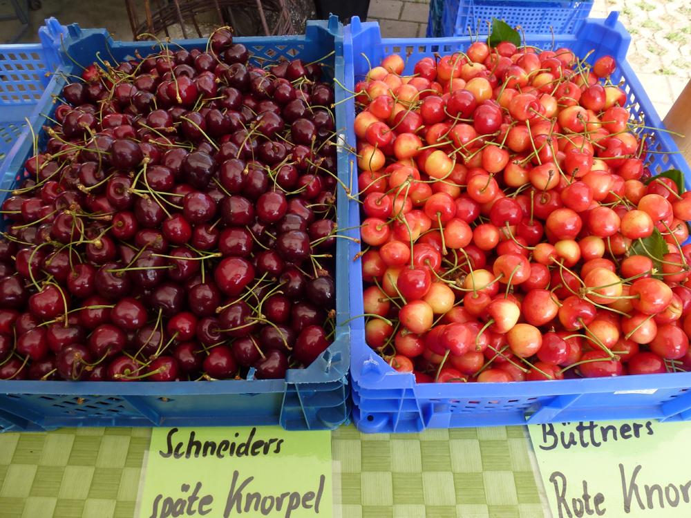 Kirschen-Stausee Obst