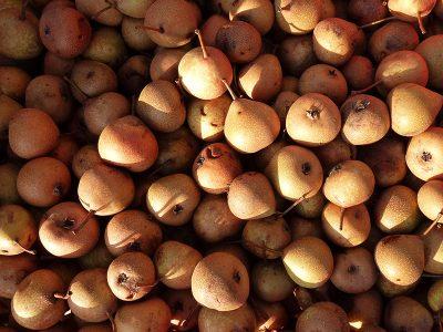 Palmisch-Birne Frucht