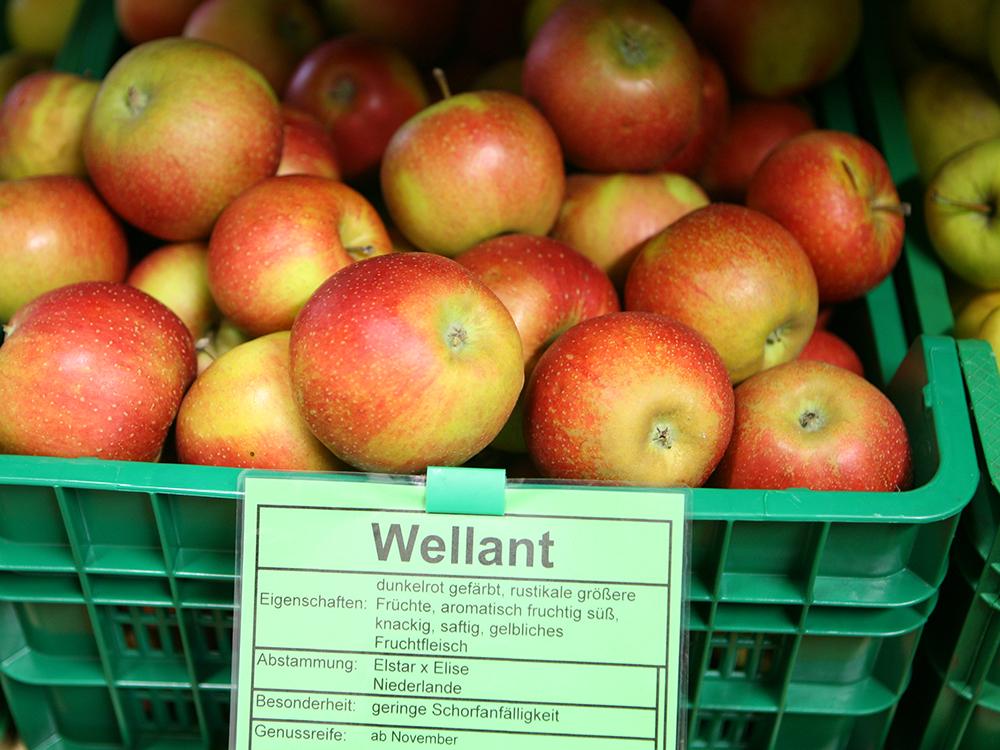 Wellant
